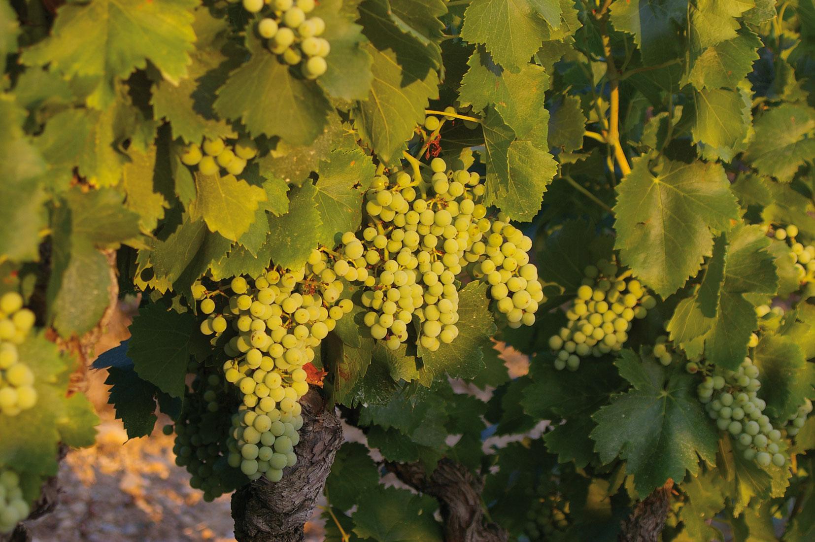 Gîte les Vignes